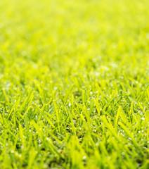 Lawn Dew Drops