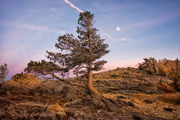 Lone Pine at Sunset