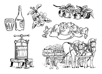 Cartoon illustration of apple branches, flowers, press for squeezing, horse cart, bottle with glass, label. Design for apple cider, juice and natural cosmetics. Hand-drawn black and white illustration