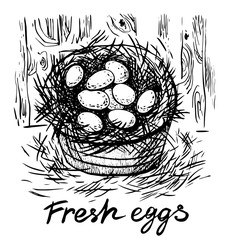 Fresh eggs. Vector hand drawn graphic illustration.