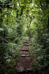 Steps Leading through the Lush Rainforest of Mombacho Volcano, Nicaragua