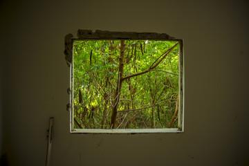Framed boken window