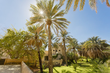 Palm oasis at Nizwa Fort in Oman