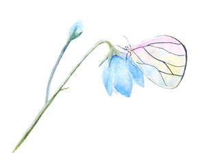 watercolor flower and butterfly on white background