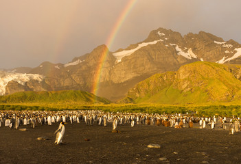 A colony of king penguins on black sand in the foreground with a rugged mountain and cloudy sky in the background. A double rainbow and gold light is above.