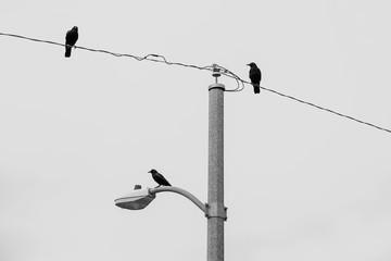 crow hang