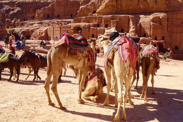 Petra, Jordan - Bedouin camels and donkeys waiting for tourists at Petra archaeological ancient city of Petra, Wadi Musa, Middle East