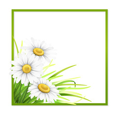Green frame with grass and daisies in corner.