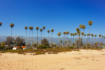 Sand beach with palms in Santa Barbara