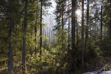 forest in Tatry