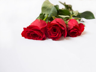 Three red roses on white background. Romantic background.