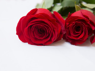 Red roses, close up