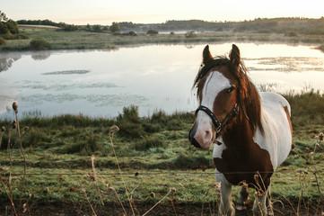 Horse on a misty morning
