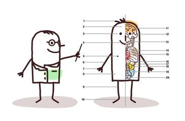 Cartoon Doctor and Male Anatomy
