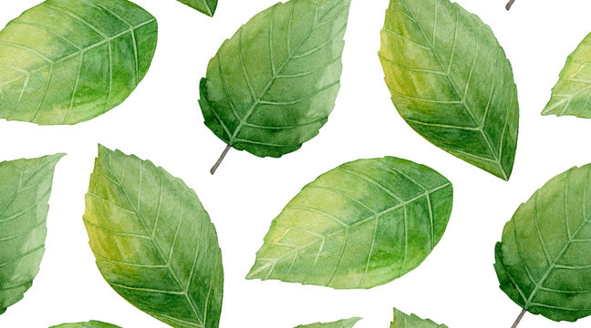 Green leaves pattern. Nature background. Watercolor illustration