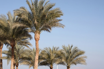 Palms, Egypt, sharm el sheikh