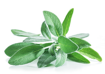 Photo sur Toile Condiment Fresh velvet leaves of garden sage on the white background.