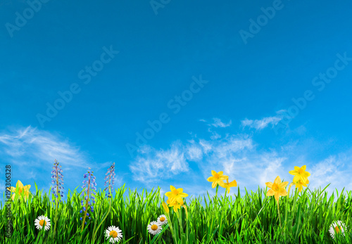 Grass And Spring Flowers Background Stockfotos Und Lizenzfreie