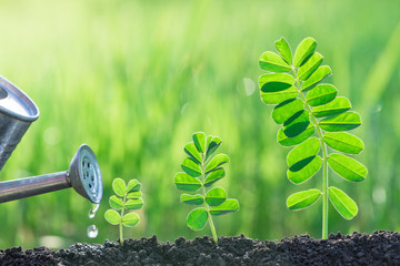 watering seedlings growth nature concept