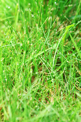 green background by the fresh grass