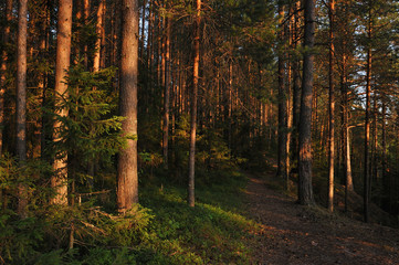 Evening in forest.