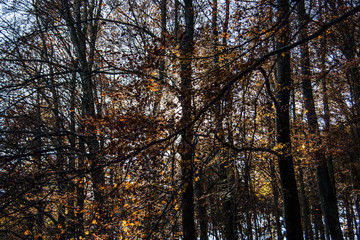 Herbstwald mit Laubbäumen