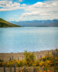 Tranquil waters of Lake Tekapo in summer with colorful flowers in the foreground in New Zealand