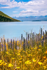 Wild Flowers at Lake Tekapo, alpine lake in new Zealand, South Island.