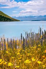 Wild Flowers at Lake Tekapo, alpine lake in new Zealand, South Island.