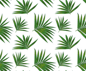 Seamless pattern with kentia palm tropical branch, green leaves cute wallpaper. Vector elegant print isolated on white background. Delicate art template