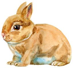 Watercolor illustration of beige rabbit