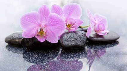 Tuinposter Orchidee Spa background with pink orchid and stone.