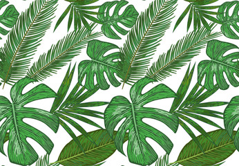 Vector  Seamless pattern of various tropical palm leaves. background of green foliage on a white.