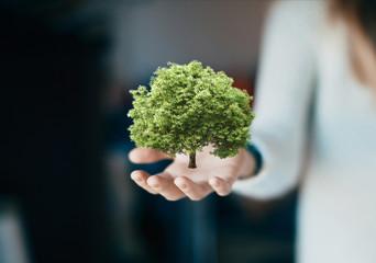 Mano di donna con modello di albero, quercia 3d, ecologia o riciclo