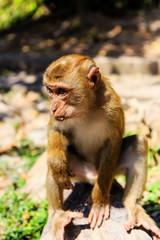 Monkey at sunny day at Monkey Hill