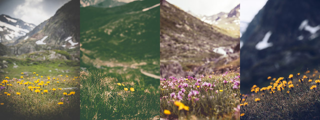 wintage photos of beautiful wild flowers - collage