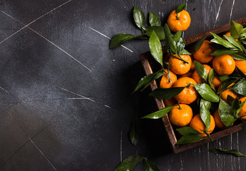 Tangerines with green leaves in wooden box on dark background
