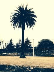 Una palmera de ciudad