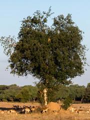 African Park Landscape