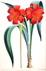 Illustration of a flower.