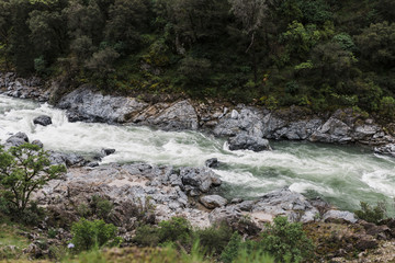 High angle view of Yuba River flowing by trees in forest