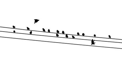Common starlings (Sturnus vulgaris) on the power line. Vector silhouette a flock of birds