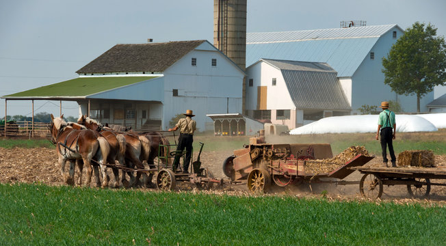 Amish Farmers working the Fields