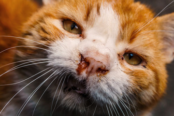 Homeless beautiful red cat with white stripes on the streets of the city wounded after a fight