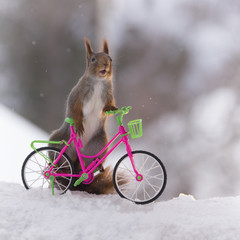 red squirrel standing on a bicycle