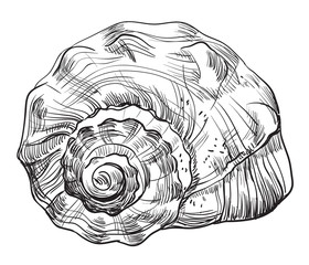 Hand drawing seashell-12