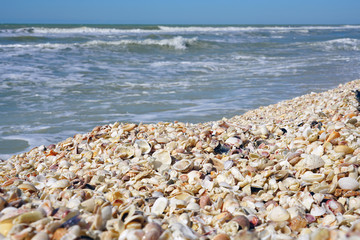 Shells on the beach by the sea in Sanibel, Florida