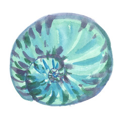 Single big round turquoise blue seashell painted in watercolor on clean white background