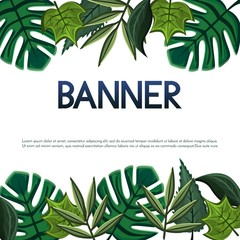 Vector banner,poster,invitation card design with tropical and simple leaves. Vector illustration