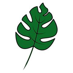 tropical leaf green spring season eco nature vector illustration
